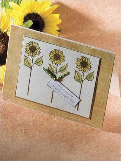 Sunflower Trio photo